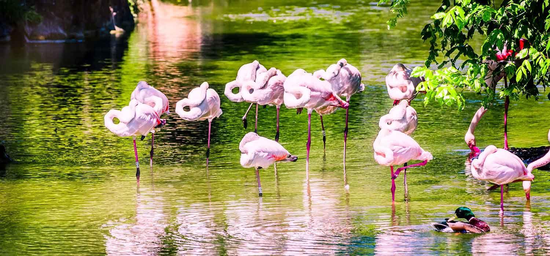 made in gone - Les flamants roses, Parc de la Tête d'Or, Lyon
